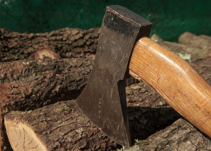 Jak ściąć drzewo?